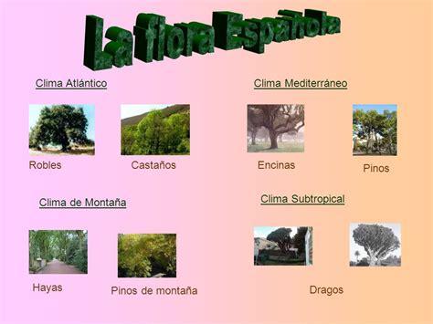 ESPAÑA SITUACION GEOGRÁFICA RELIEVE ESPAÑOL CLIMA FLORA Y ...