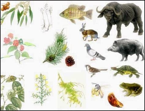 ESPÉCIES EXÓTICAS INVASORAS - Um problema à biodiversidade ...