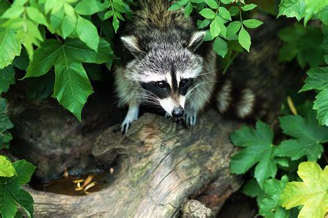 Especies Invasoras | WWF España