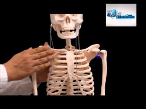 ESQUELETO HUMANO INTERACTIVO - YouTube