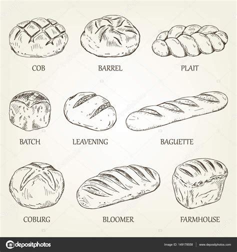 Esquema conjunto de diferentes tipos de pan. Ilustración ...