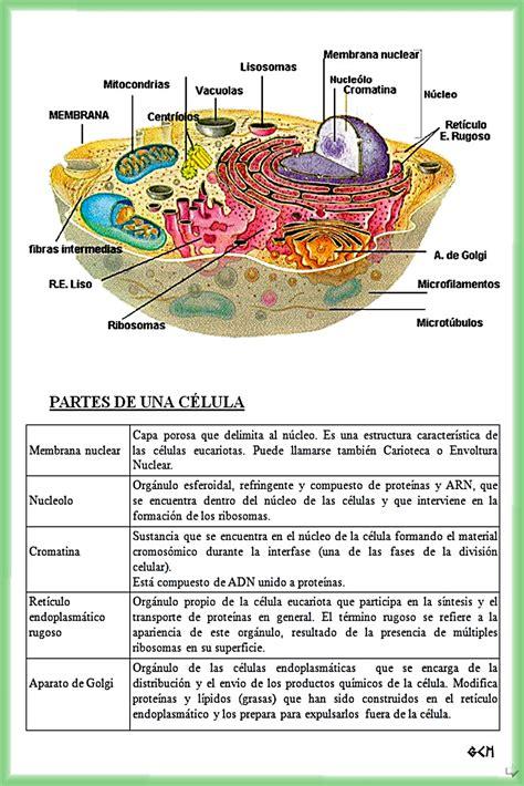Esquemas Galledor: Partes de la Célula Eucariota