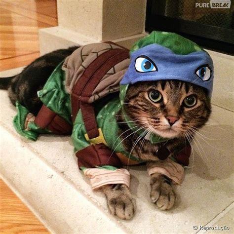 Esse gato foi caracterizado com personagem Leonardo, de ...