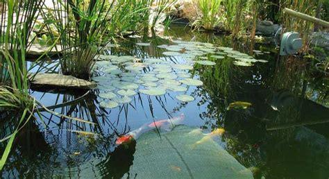 Estanque de plantas y peces - Plantas de estanque