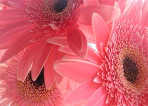 Estas fotos de flores para fondo de pantalla es para ti ...