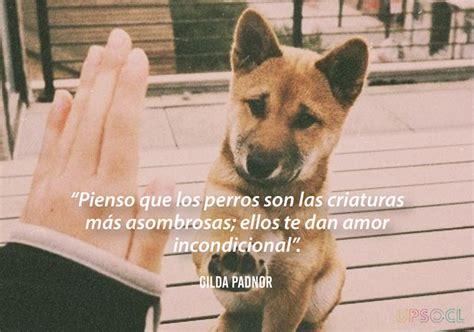 Estas frases demuestran lo maravillosos que son los perros ...