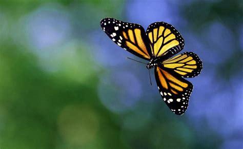 Estas Son Las Fotos De Mariposas Preciosas | Imagenes De ...