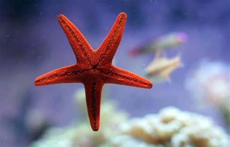 Estrellas de Mar. Todo lo que siempre quisiste SABER!