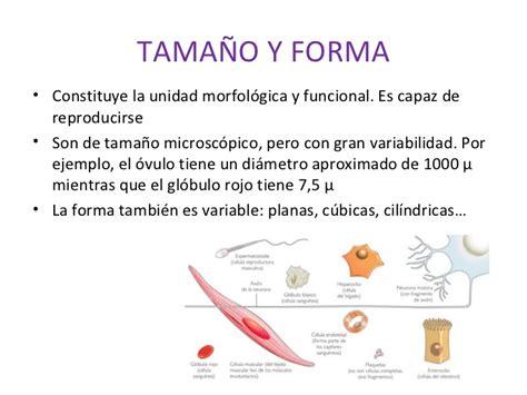 Estructura celular  1