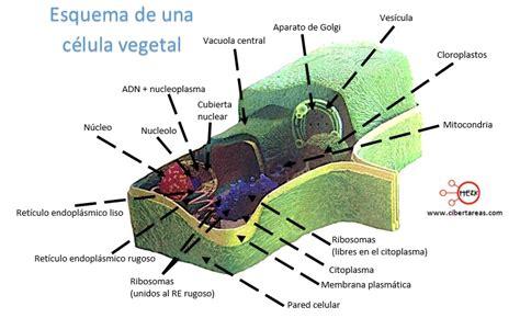 Estructura y función de las células procariota y eucariota ...