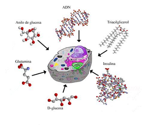Estudio de las Biomoléculas