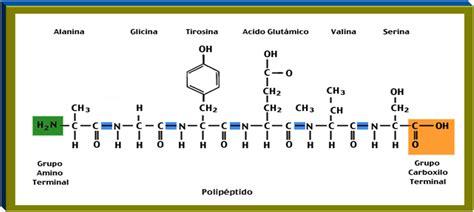 Estudio de las Biomoléculas: Proteínas