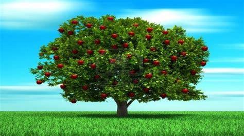 Estudio Evangelio de Juan Conferencia #28 | El fruto en la ...