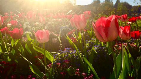Europa na Primavera: 5 motivos para provar que esta é a ...