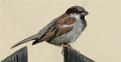 Europa se queda sin pájaros: se han perdido 421 millones ...