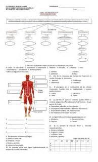 Evaluacion. L.2. sistema muscular