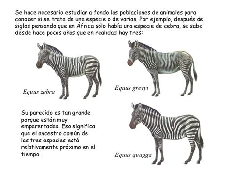 Evolución 4.- Formación de nuevas especies