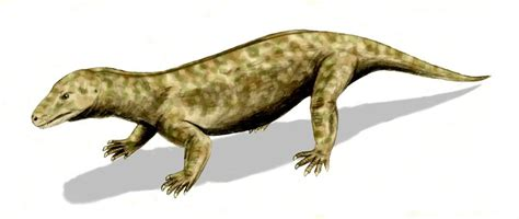 Evolution of mammals - Wikipedia