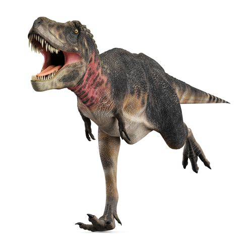 Executive Job Seekers – Are you a Dinosaur?