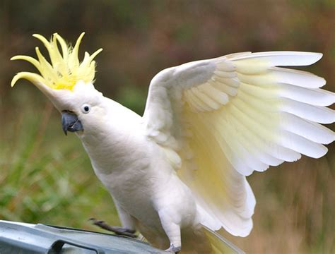 Exotic birds for sale  Funny Animal