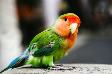 Exotic Birds for Sale