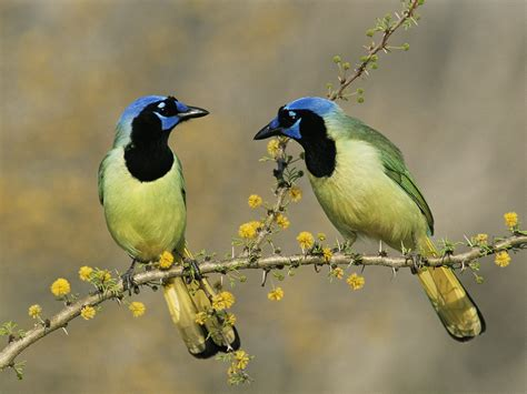 Exotic BIRDS !!! - Funny Pictures Wallpapers collections