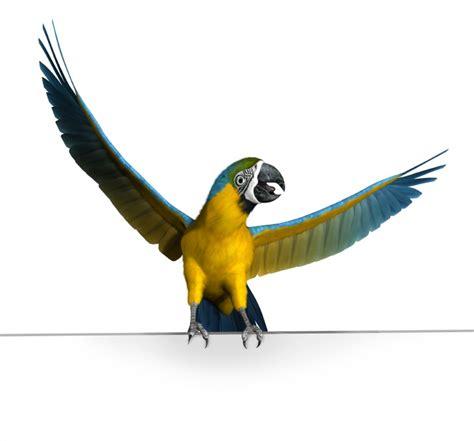 Exotic Birds Names | www.pixshark.com - Images Galleries ...