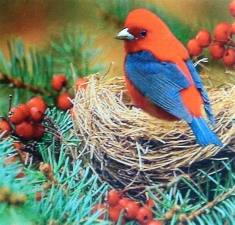 Exotic Birds Photograph