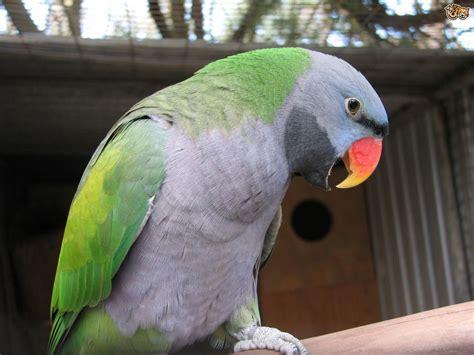 Exotic Parrots 4 Sale