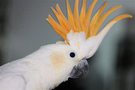 ExoticBirds.com - Exotic Birds