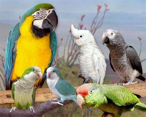 ExoticBirds.com   Exotic Birds