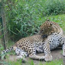 Experiencia en Zoo de Santillana del Mar, con niños ...