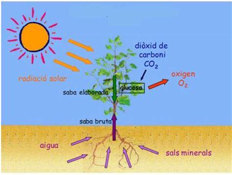 Experiment de la fotosíntesi | Escola Magí Morera i Galícia