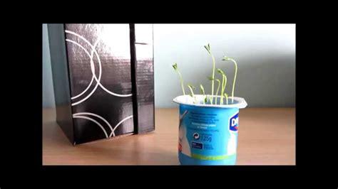 Experimento casero: ¿crece una planta sin luz?   YouTube