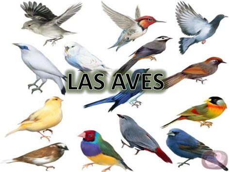 exposicion de las aves