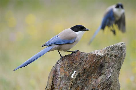 Extremadura is one of the best places for birdwatching in ...
