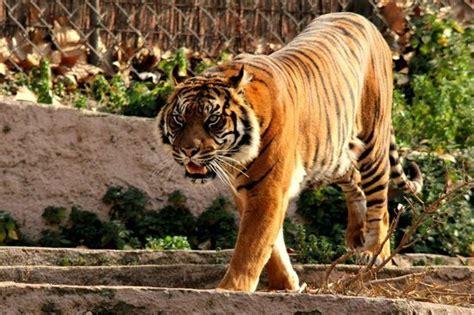F8 - Picture of Barcelona Zoo, Barcelona - TripAdvisor