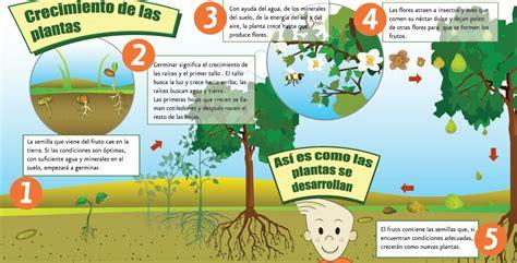 Factores físicos que afectan la germinación | camilap03