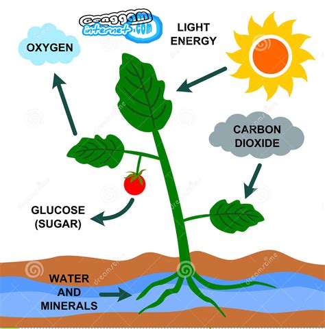 Faktor Faktor yang Mempengaruhi Fotosintesis   Genggam ...