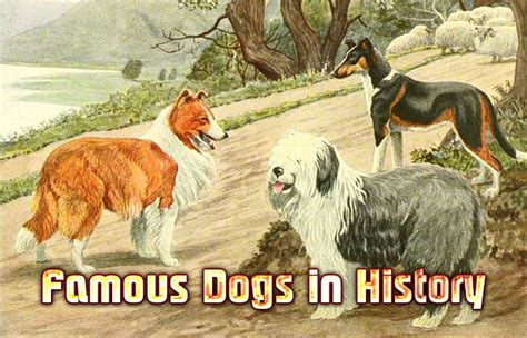 Famous Dogs in History | Did You Know Pets