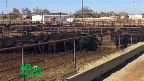 Farm Factor - Farmers and Ranchers Livestock Commission ...