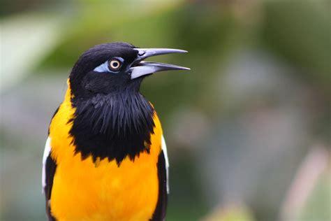 Fauna de Venezuela   Wikipedia, la enciclopedia libre
