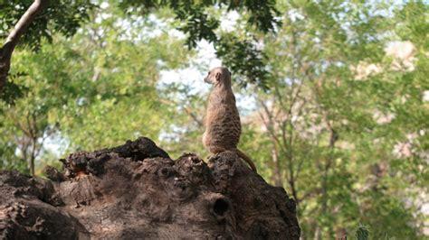 Faunia: parque temático de la Naturaleza en Madrid ...