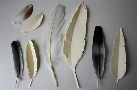 feather types - DriverLayer Search Engine