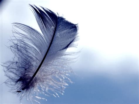 Feather wallpapers hd