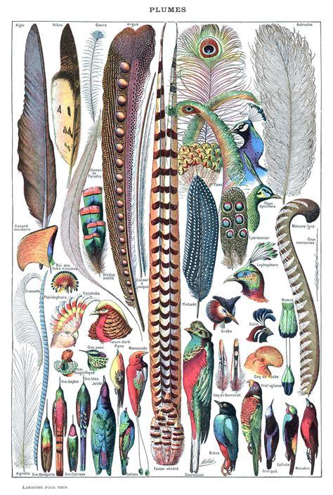 Feather - Wikipedia