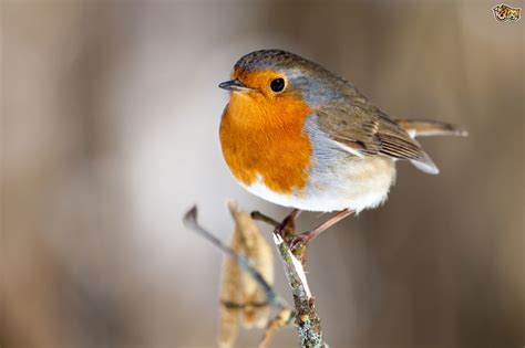 Feeding wild birds during the winter | Pets4Homes