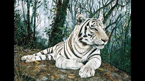 felinos el tigre blanco   YouTube