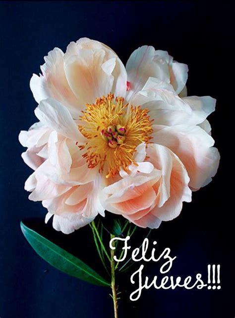Feliz Jueves +75 Gifs e Imágenes para Compartir Frases y ...