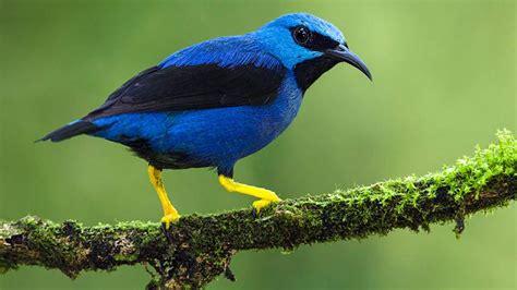 Female birds get drabber when their males fool around ...